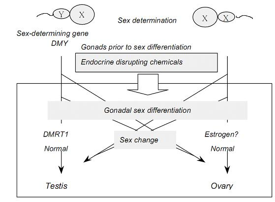How to chemically determine fish sex